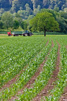 Tractor working on corn field