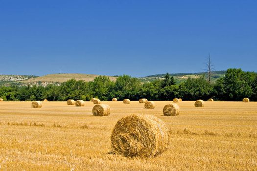 Hay roles on harvested field
