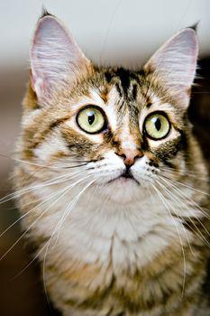 Cute cat expression. Pet Portrait.