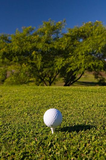 Golf ball on tee in golf field, with trees ahead. Focus on the ball.