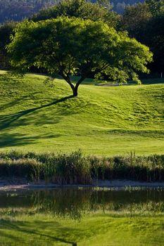 Tree in golf field, near lake