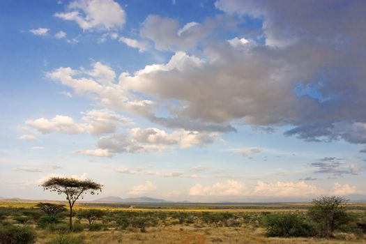 African Landscape - Kenya