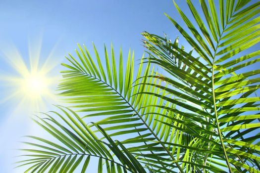 Palm branches in the summer sun