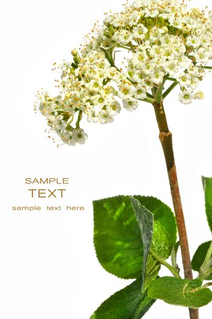 Wild botanical flower