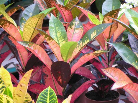 The abstract background representing diversicolorous leaves of indoor plants