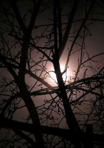 The abstract background representing branches of a tree against light of the moon in a fog