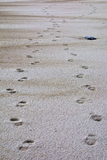 crossing footsteps in the sand at the beach