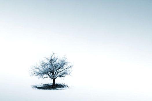Lonely tree in winter scene