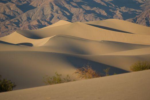 Desert Solitude 1
