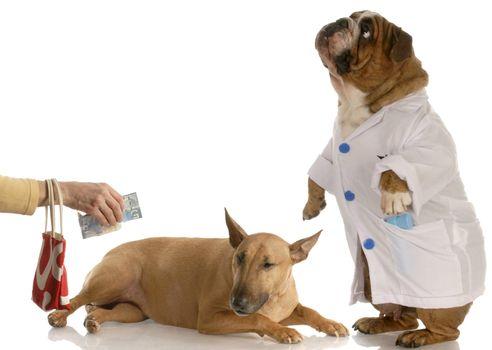 paying for vet bill
