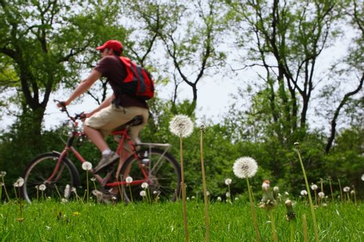 A person riding a bicycle on a spring day