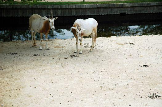 animals in madrid zoo, horizontally framed shot