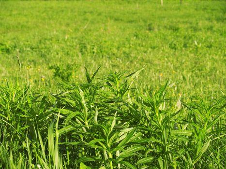 A closeup of view of fresh green grass