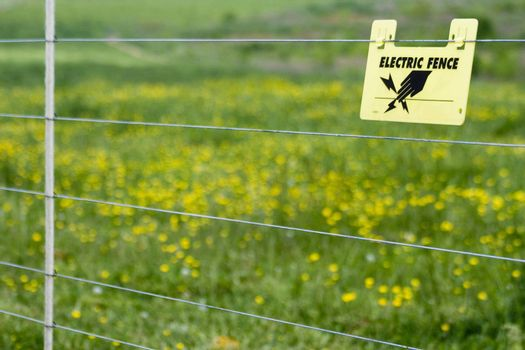 An electric fence with a sign on it that says electric fence in front of a field of buttercups