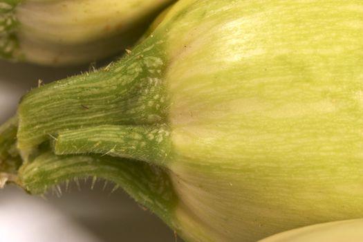 marrow stem