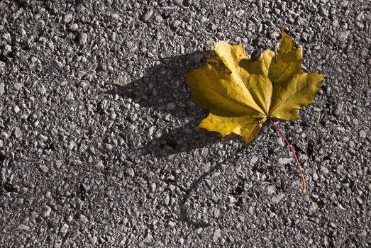 Single yellow maple leaf lying on the street. Autumn image.