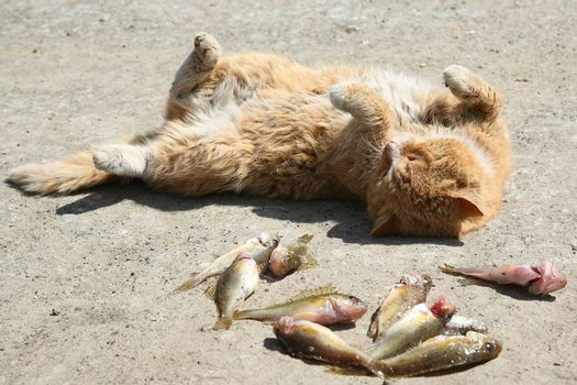 lazy cat and several fish on a hot day