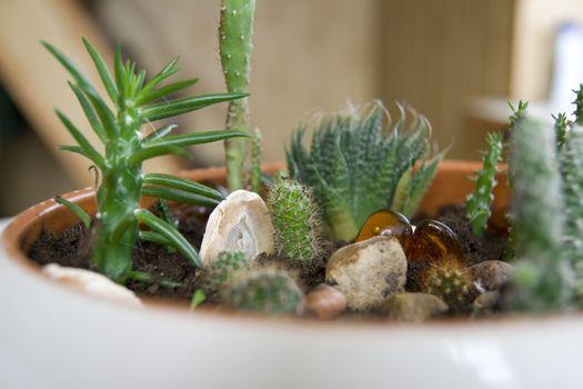 Different sort of cactus in mini rock-garden