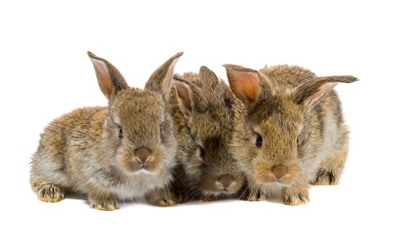 close-up tree little rabbits, isolated on white