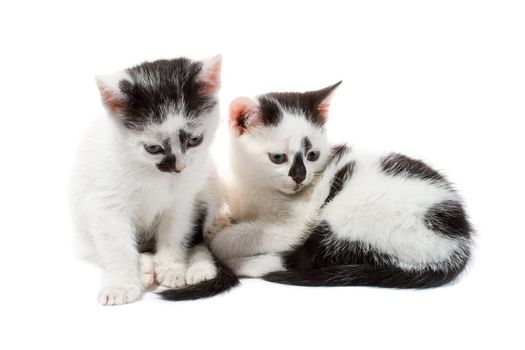 close-up black and white kittens