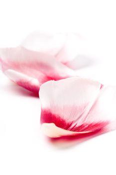 pink tulip petals
