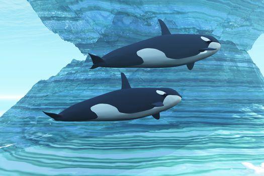 Two killer whales swim around submerged icebergs.