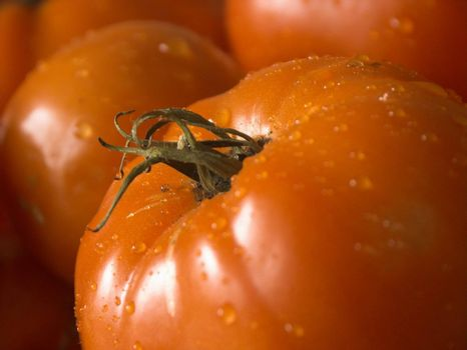 closeup of a wet tomatoe