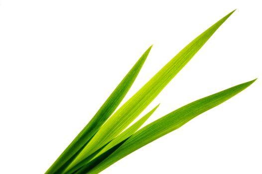 Freshness leaf