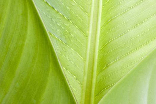 Close-up of tropical leaves in Brazil