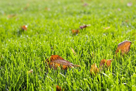 Autumn grass with yellow leaves. Good autumn background.