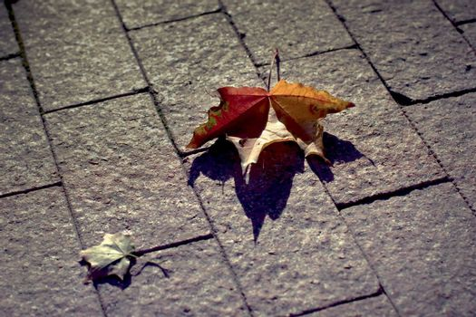 Autumn yellow leaves on a sidewalk at autumn time.
