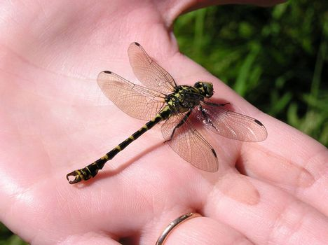 A close up of a dragonfly on hand