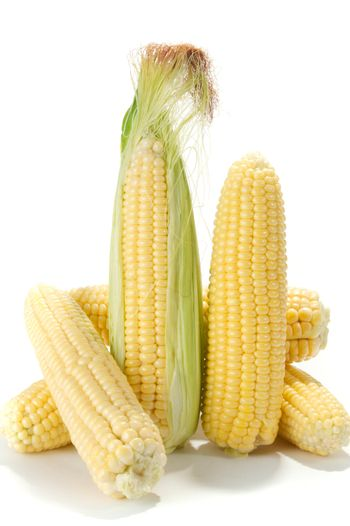 Ripe fruits of sweet corn on white