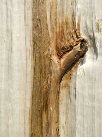 Close-up of natural wooden structure
