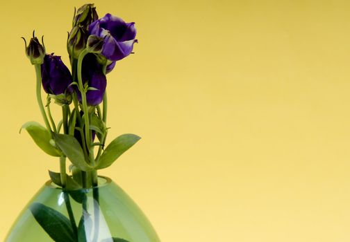 Pastel design with flower