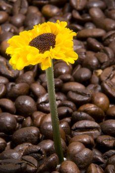 Energetized sunflower