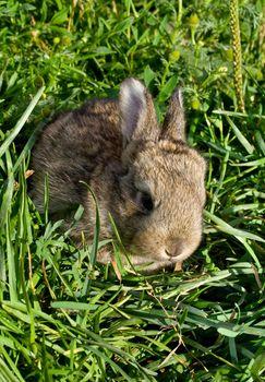 gray little rabbit into green grass