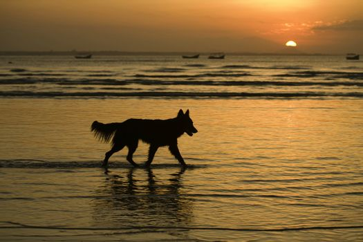 Doggy Silhouette