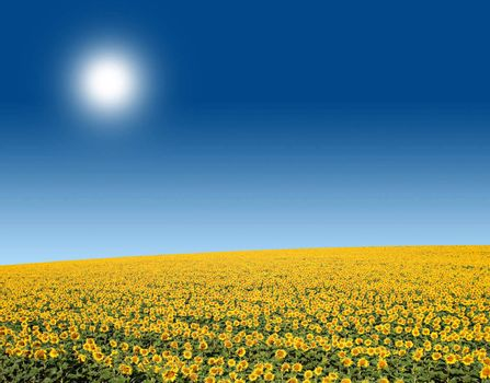 A beautiful field of sunflowers on a bright sunny day, in the south of France.