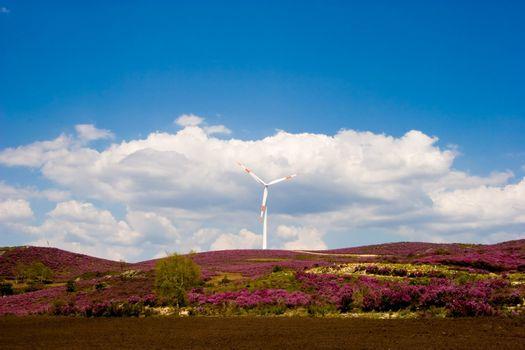 Wind Turbine on a rural field