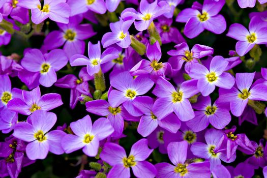 A background of violet flowers.