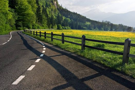 A country road next to a yellow flowered field in Switzerland