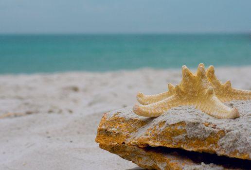 starfish on a stone
