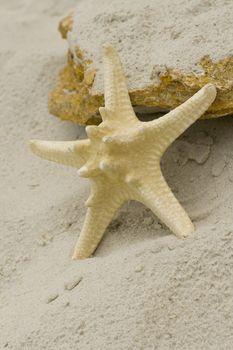 starfish and stone
