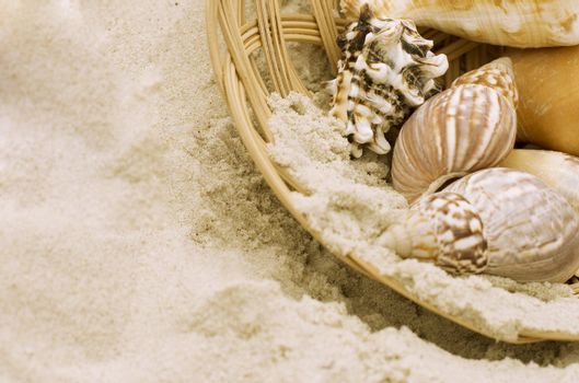 shells in the basket