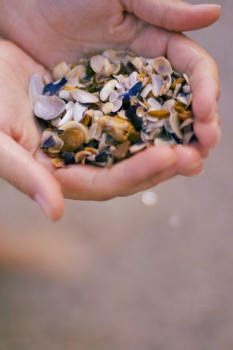 seashells in hands