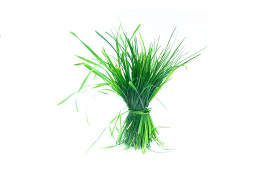 a tuft of grass