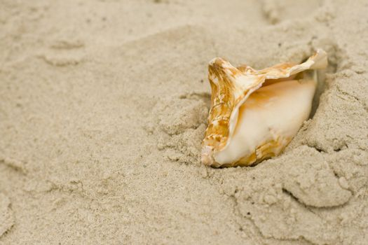 shell on sand