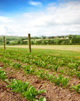 Rural Vegetable Plot
