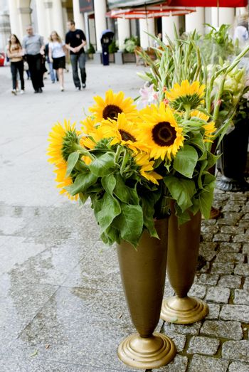 sunflowers in the city